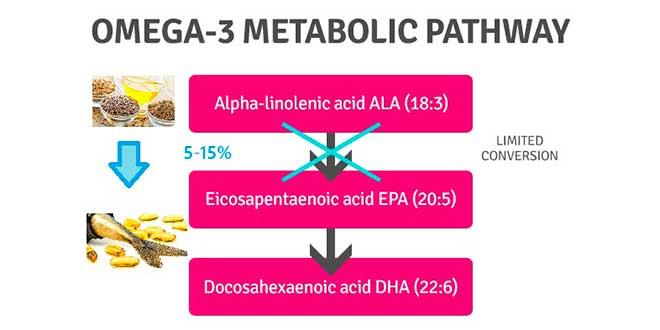 Rota metabólica Omega 3