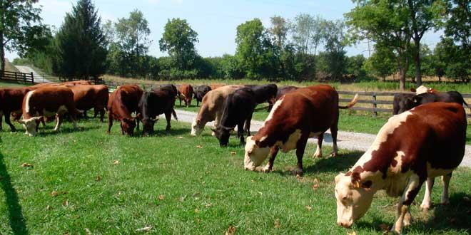 Animales alimentados de pasto natural