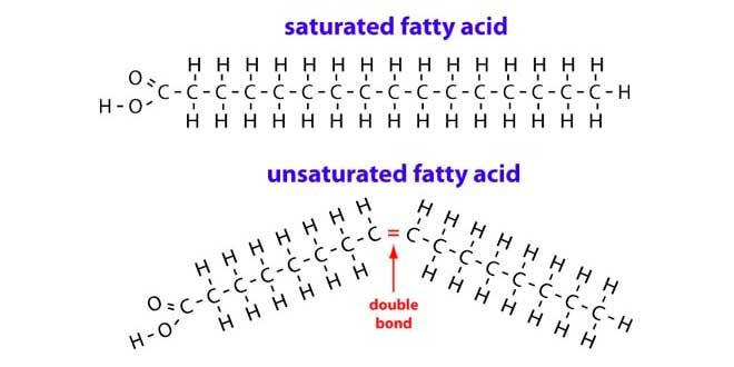 Molécula Grasa Saturada