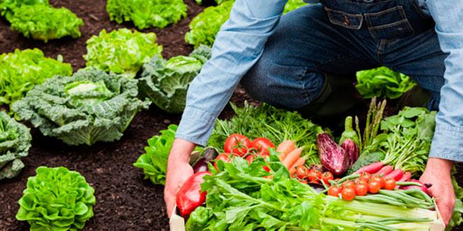 Alimentos ECO, Bio y Orgánicos: ¿existen diferencias?