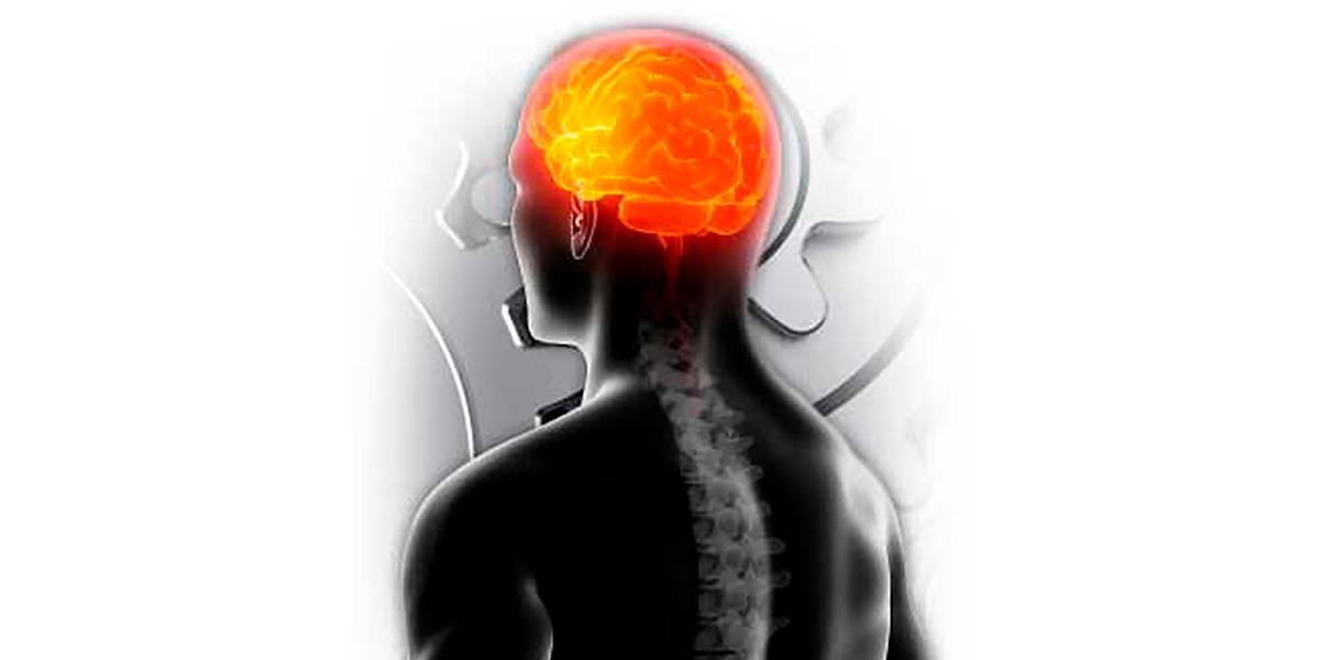 ALCAR para el cerebro