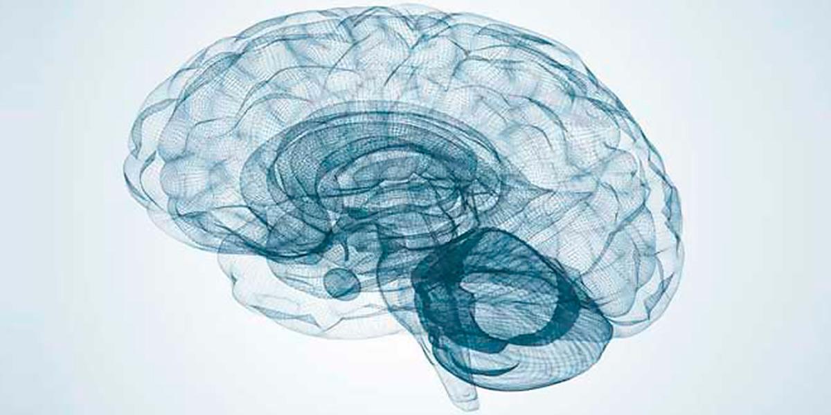 DHA para el cerebro