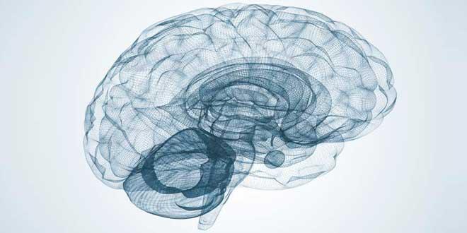 DHA y Cerebro