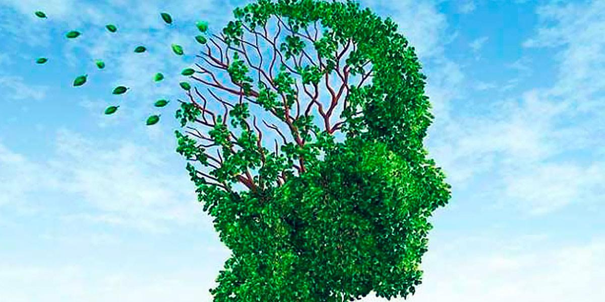 Ginkgo Biloba para el cerebro