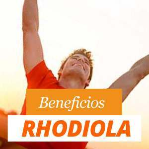 Beneficios rhodiola
