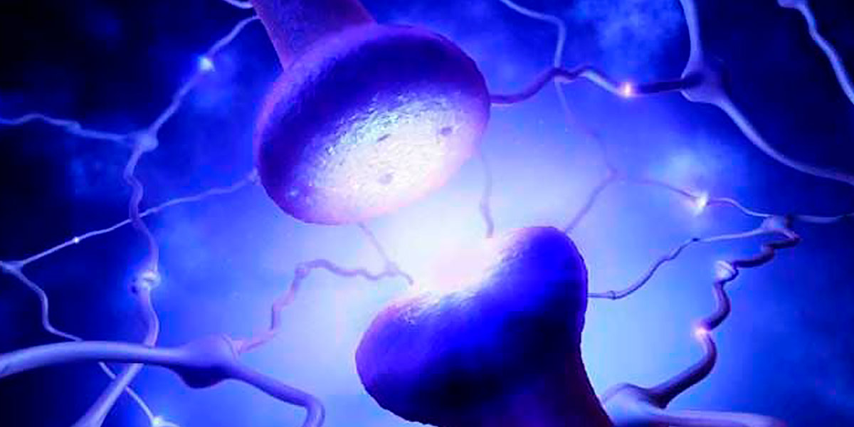 Colina e Inositol para el Cerebro