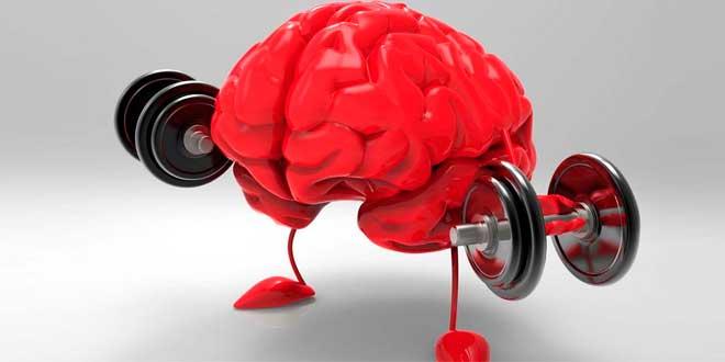 Suplementos el Cerebro
