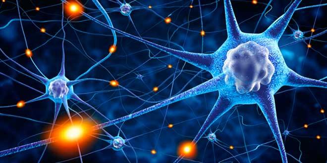 Communication neuronale