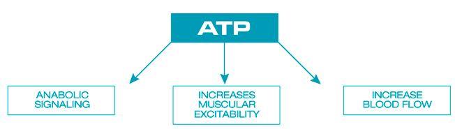 Propiedades ATP PEAK