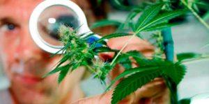 Diabetes y Marihuana, tratamiento