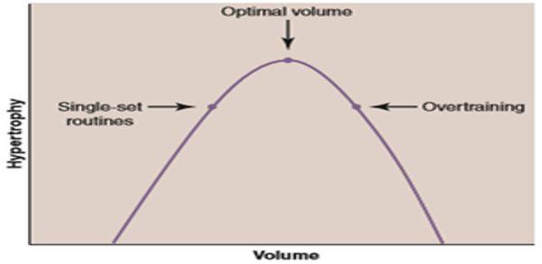 Respuesta al volumen de entrenamiento