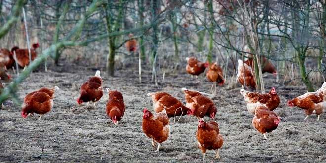¿Qué son los Huevos Ecológicos?