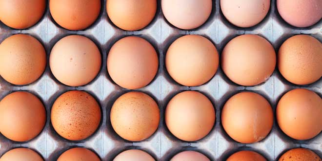 Tipos de Huevos de Gallina en el Mercado