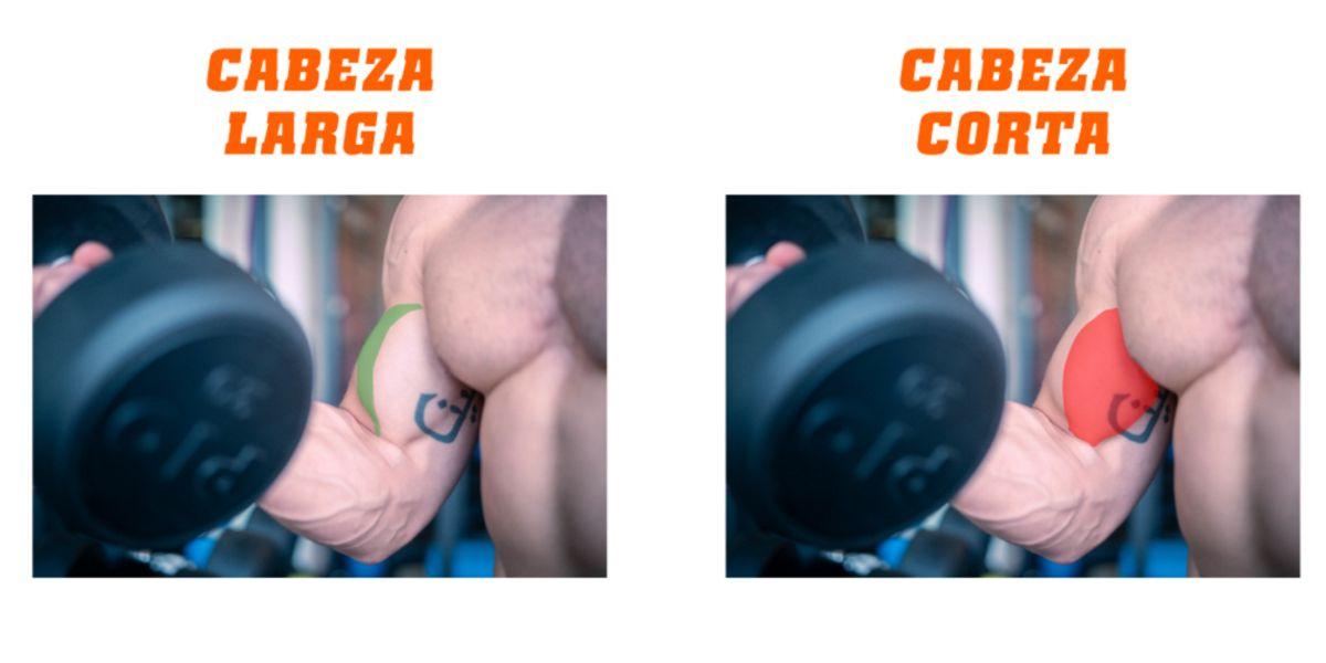 Qué son los bíceps