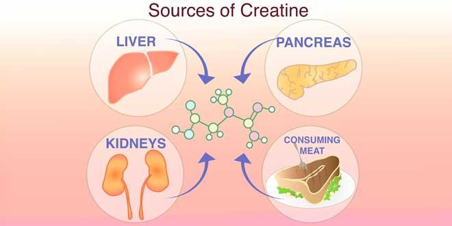 fuentes de creatina