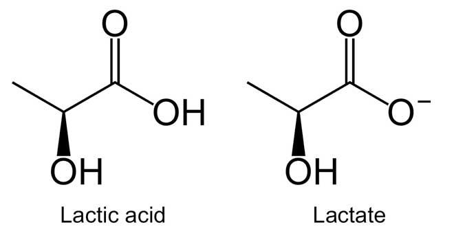 Acido Lactico VS Lactato