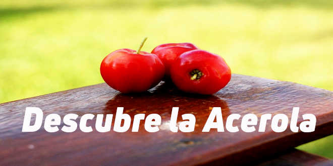 Acerola, la baya repleta de vitamina C