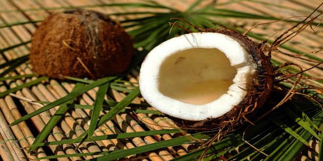 o que é oleo de coco