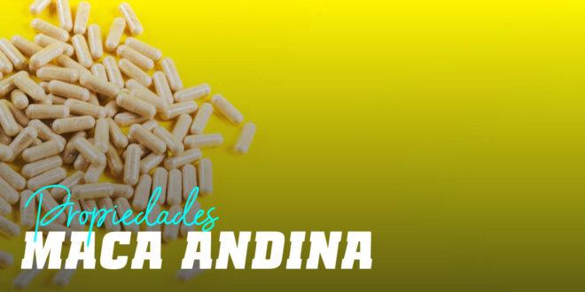 Maca Andina – Propiedades y Beneficios, Para Qué Sirve…