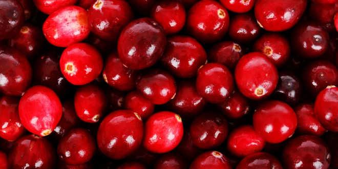 Arándano rojo fruto