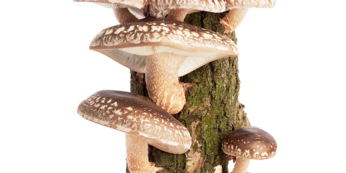 ¿Dónde crecen los hongos Shiitake?