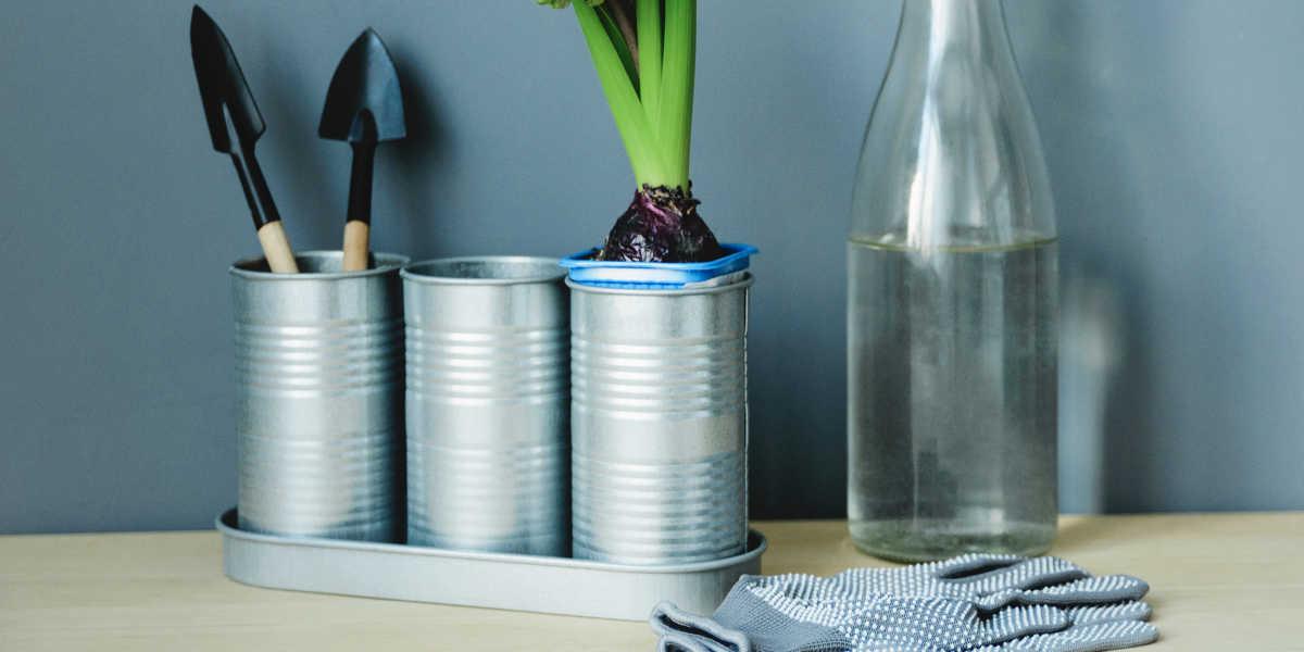 Claves para cultivar Damiana en casa