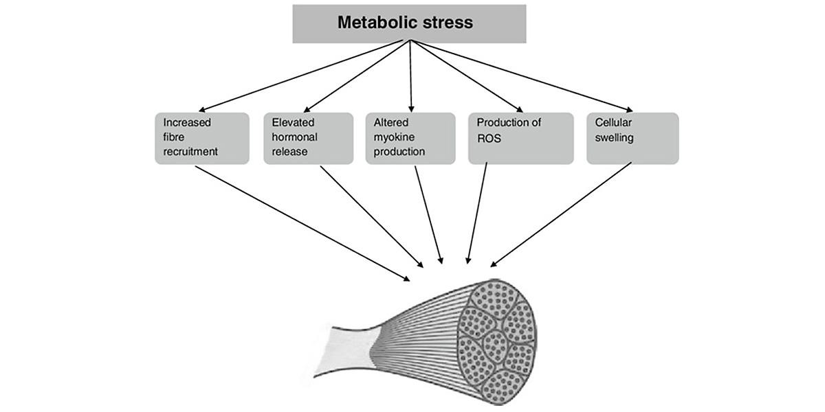 Estrés metabólico