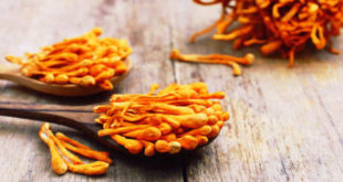 Ingrediente Cordyceps