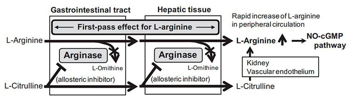 Ruta metabólica arginina