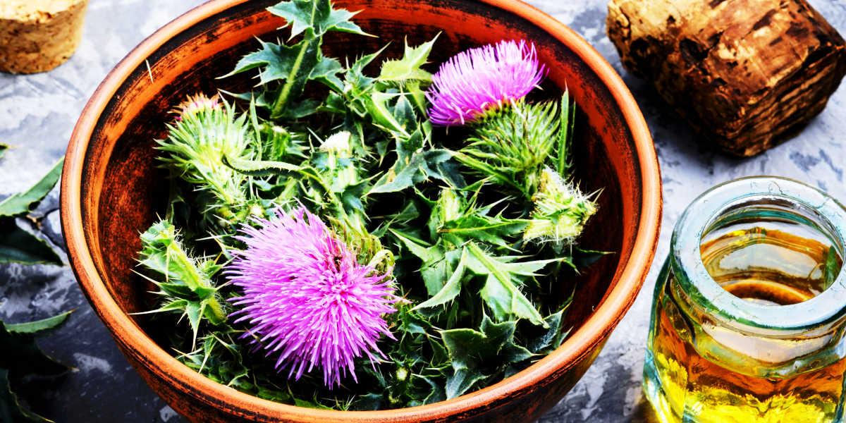 ¿Cómo puede beneficiarte una planta como el cardo mariano?