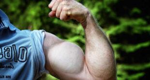 CLA y propiedades para los músculos