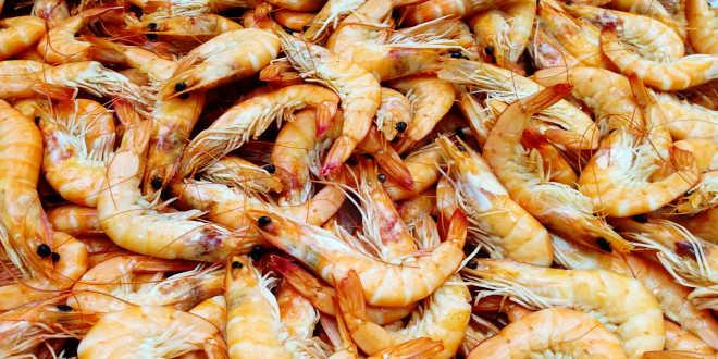 Crustáceo chitosán