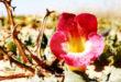 Harpagofito: la Garra del Diablo le gana la batalla al dolor