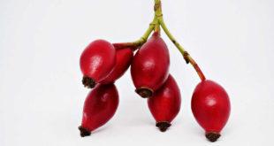 Fruto Rosa Mosqueta