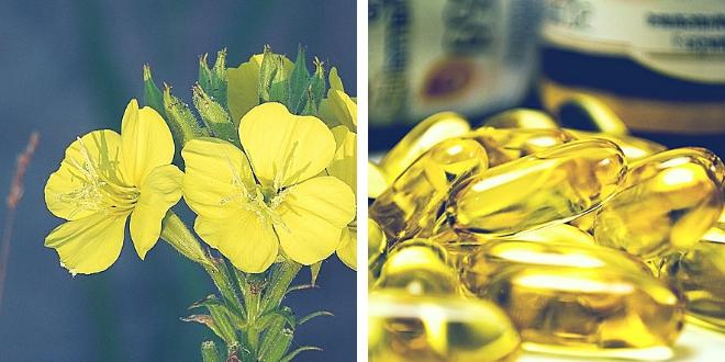 Aceite de onagra e isoflavonas de soja