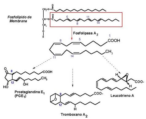 Biosíntesis de prostanoides
