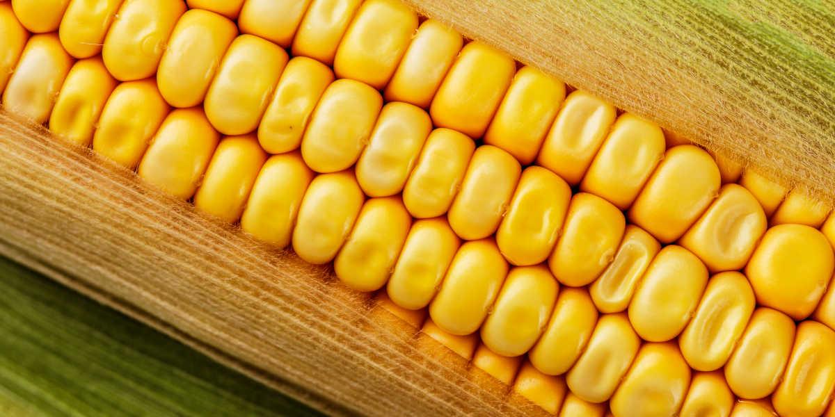 ¿Es el maíz una fuente natural de luteína?