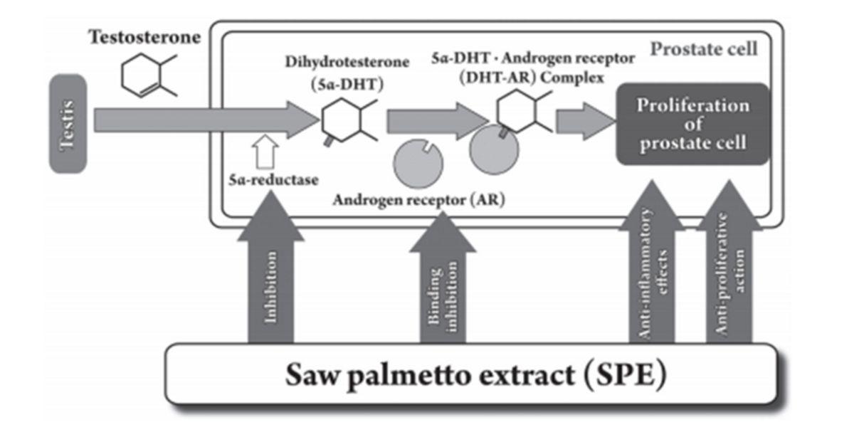 Saw Palmetto sobre la inhibición de la enzima 5-alfa-reductasa