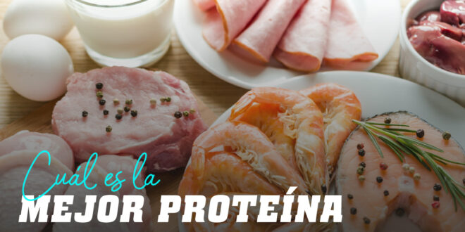 ¿Cuál es la mejor proteína?