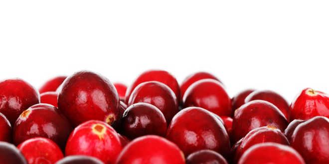 Arándano rojo como remedio cistitis