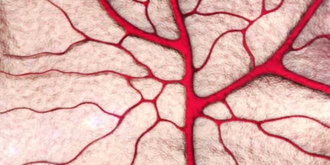 Rutina y efectos capilares sanguíneos