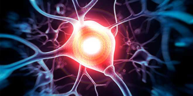 Creatina neuroprotectora