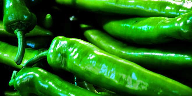 Pimiento verde fuente de rutina