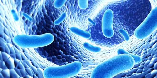 Bacterias intestino delgado