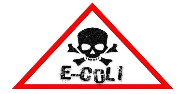 lactobacillus helveticus contra e-coli