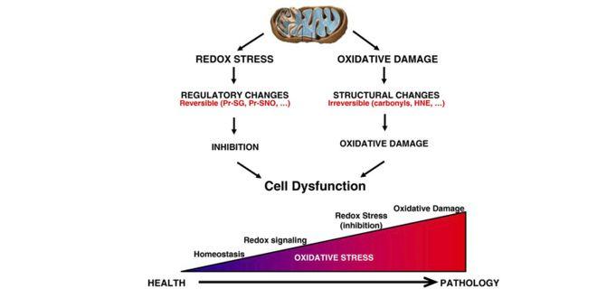 Evolución desde la salud hasta la patología