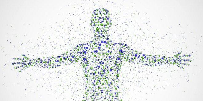 ¿Cómo afecta el Ayuno Intermitente a la Microbiota?