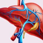 Hígado graso y actuación probióticos
