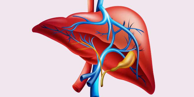 Probióticos para reducir el hígado graso