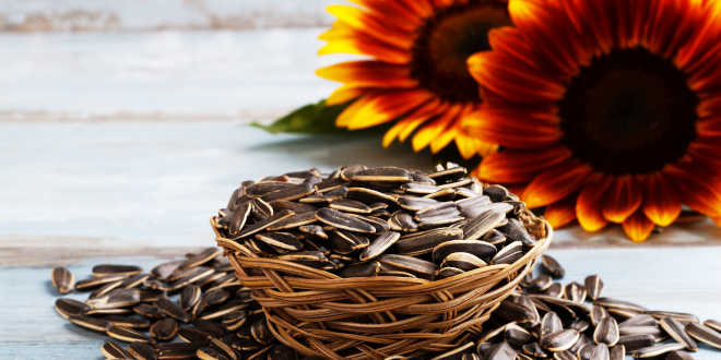 Pipas de girasol ricas en vitamina E